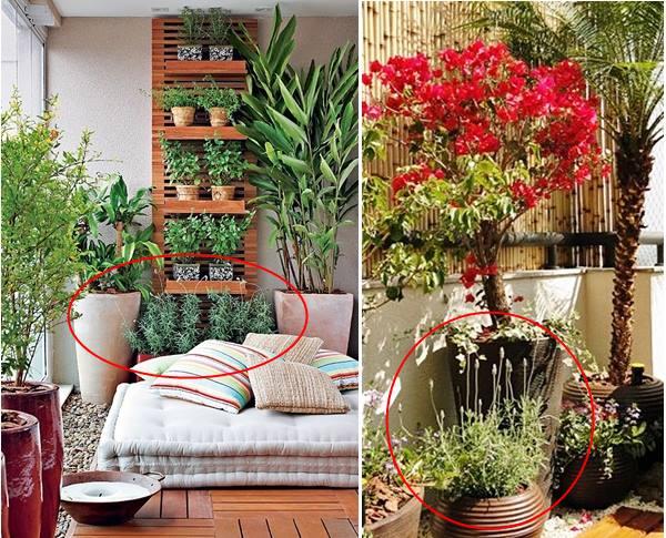 Flores para ter na sacada, varanda ou jardim