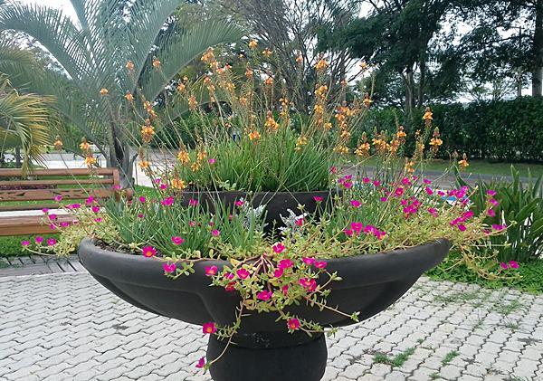 onzehoras-portulaca-oleracea-1