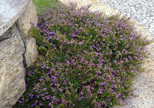 euamoflores25112011075