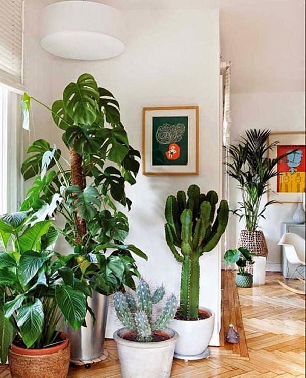 plantas_arranjo_arquitrecos_via_ernests