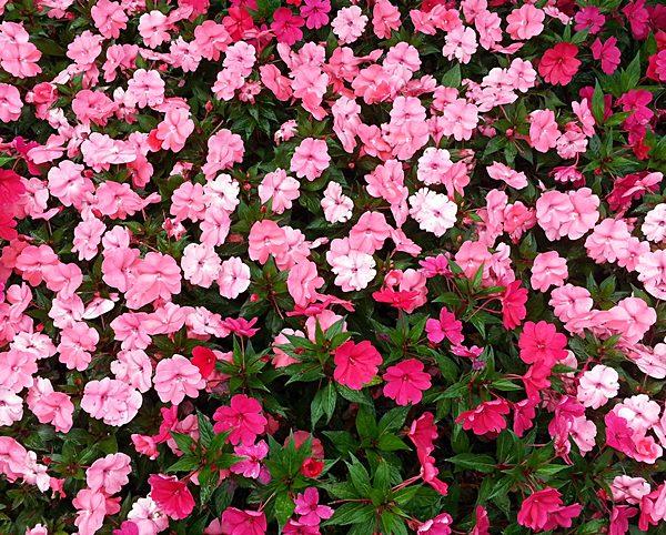 1-Florespexels-photo-22628