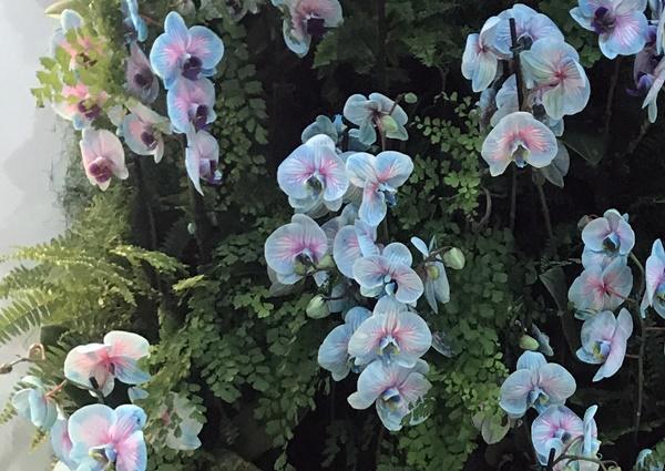 orquideas2a