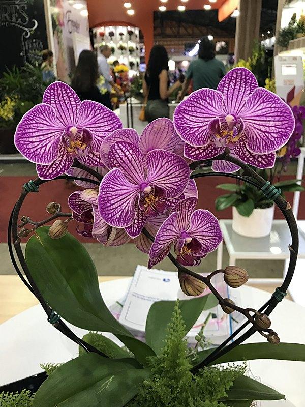 orquideas5