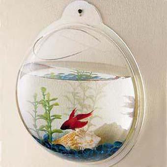 aquáriodesideratto