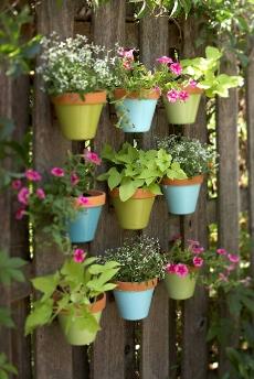 jardim vaso colorido