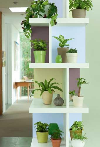 decoratrixone-small-seed-bruguer-21