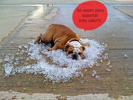 cachorro com calor