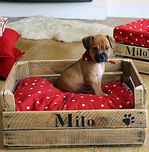cama cachorro pallet