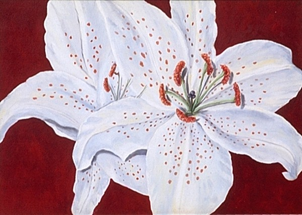 quadro óleo sobre tela - lirio branco