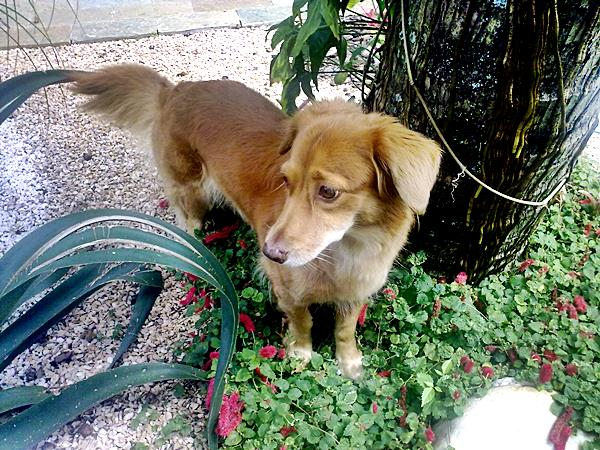 cachorro no jardim