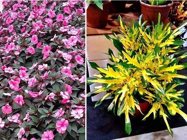 Enflor Garden Fair plantas coloridas