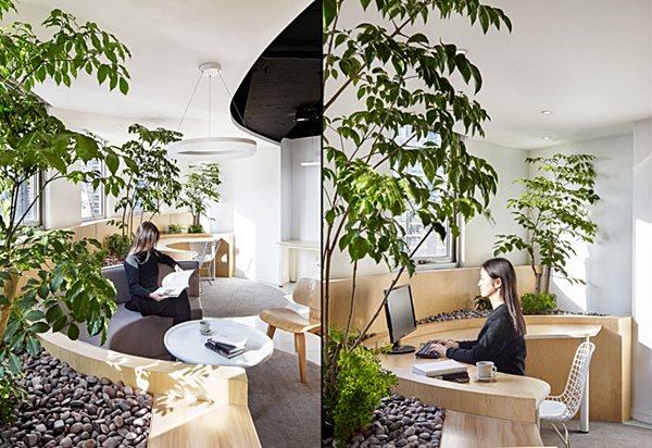 escritório plantas