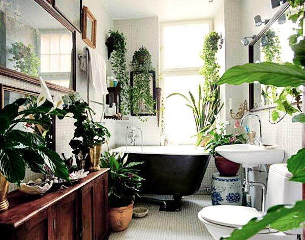 locodeco-plantas-invernadero-en-casa-9