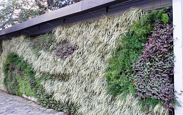 jardim vertical com lambari