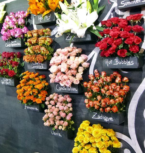 Enflor Garden Fair rosas