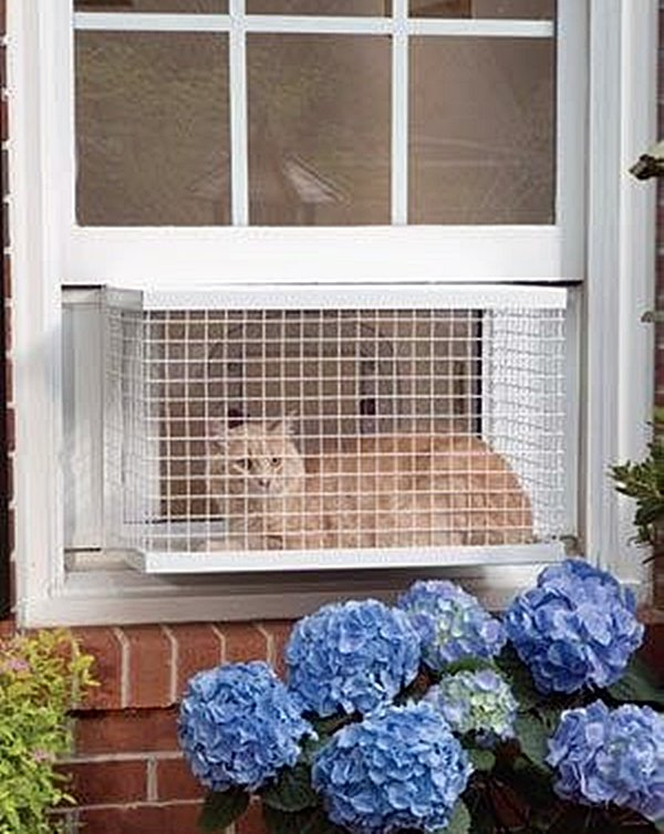 gato na janela com grade