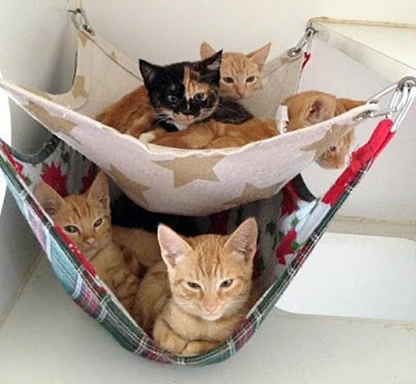 decoração para gato