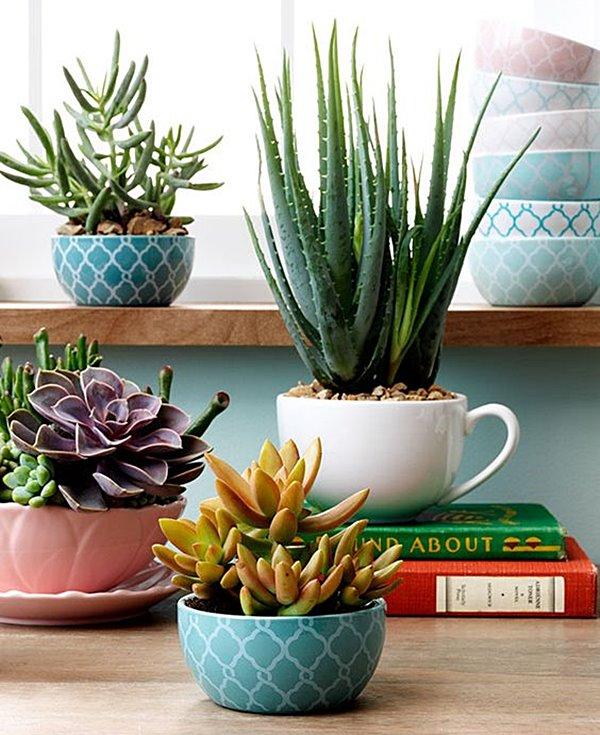 paisagismo_-_plantas_em_casa_arquitrecos_via_Target