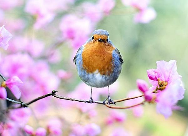verão no jardim pássaro