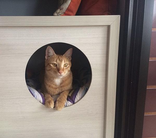 projeto sala de estar e jantar depois gatinhos
