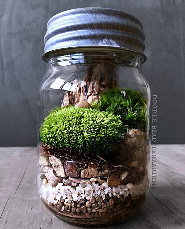 culentas popsugar Mason-Jar-Terrarium