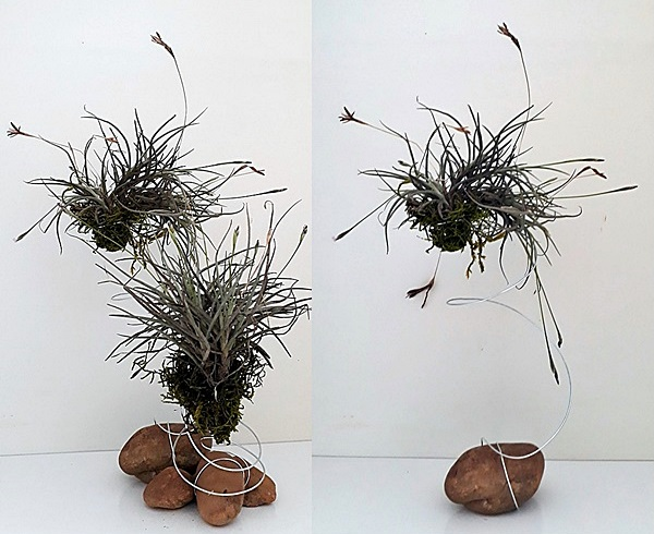 airplant_1