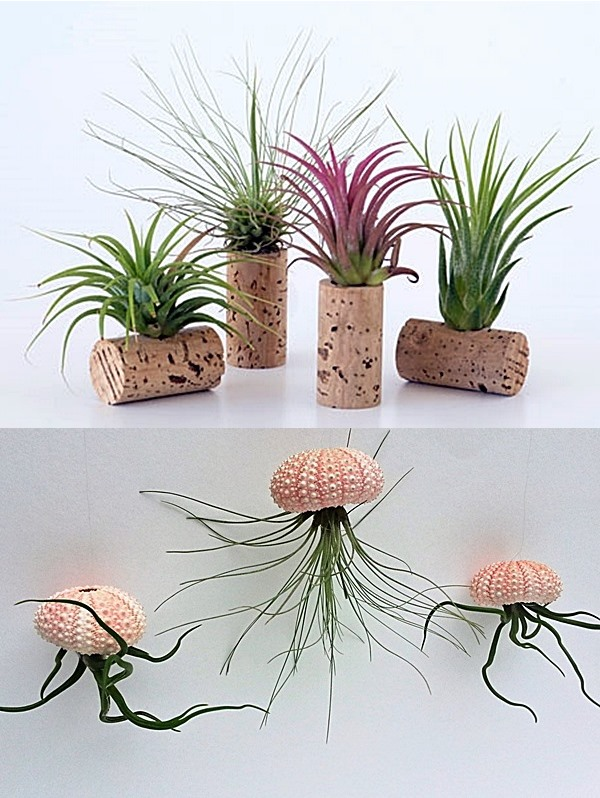airplant_3
