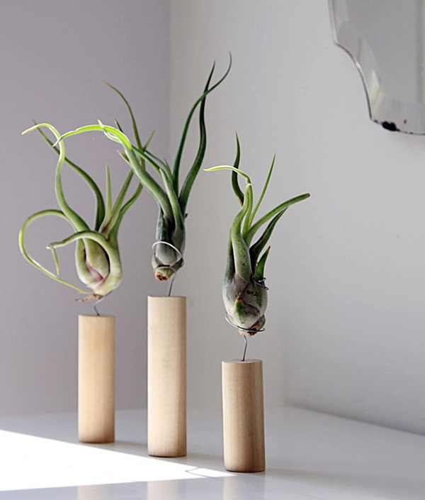 able_top_airplant_idea-14