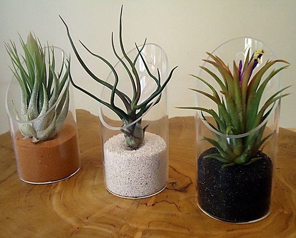 airplant 4