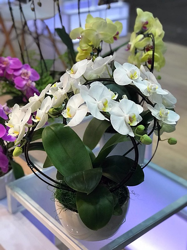 orquideas4