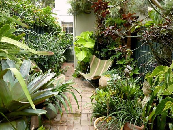 7 Plantas e cadeiras