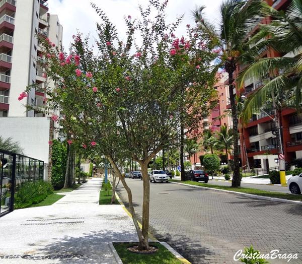 floresefolhagens arvores-e-arbustos-para-calcada-1-4