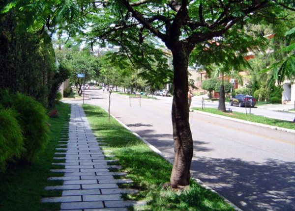 árvore na calçada 3