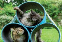 hauspanther CatCastlesHowToBook2