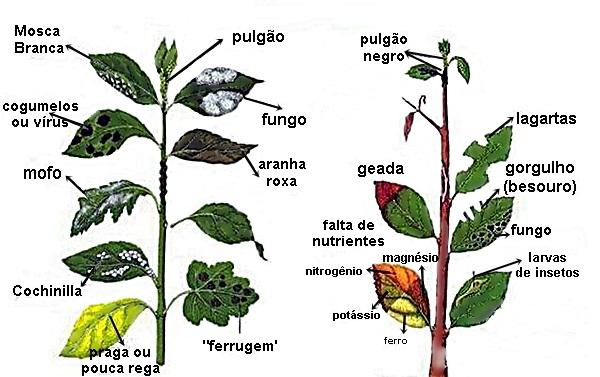 jardim outono pragas e sintomas