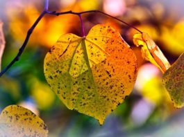 imagem de 9883074 por pixabay autumn-leaves-3813775_640