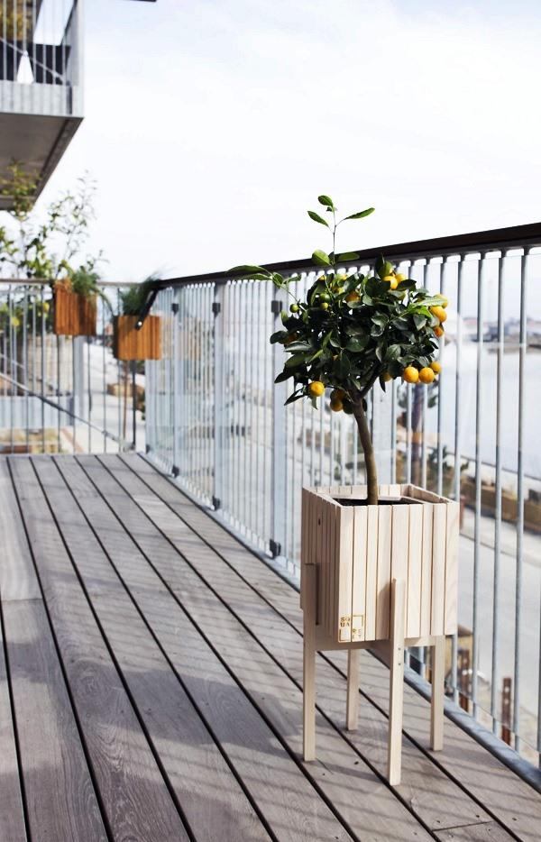 frutas na varanda - limão