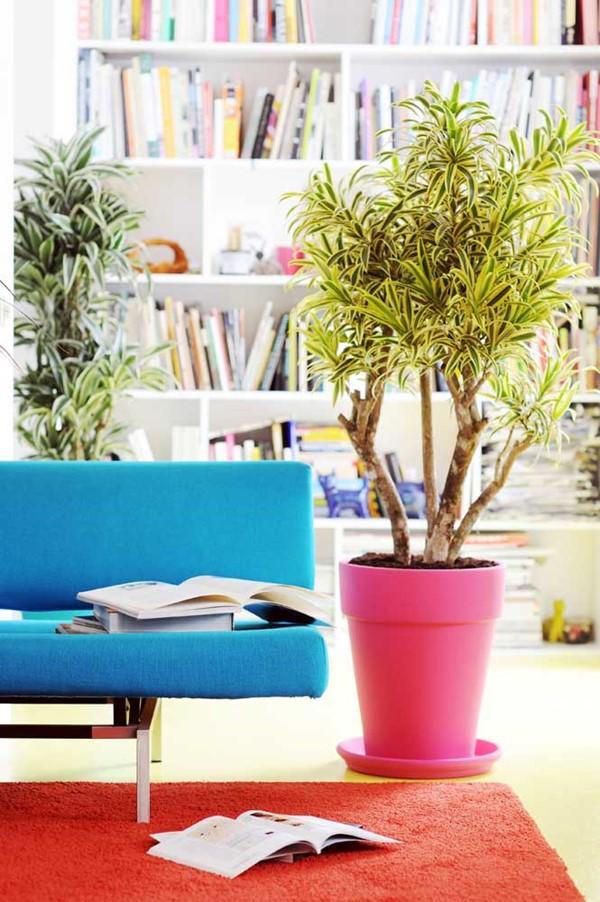 plantas para dentro de casa pleomele