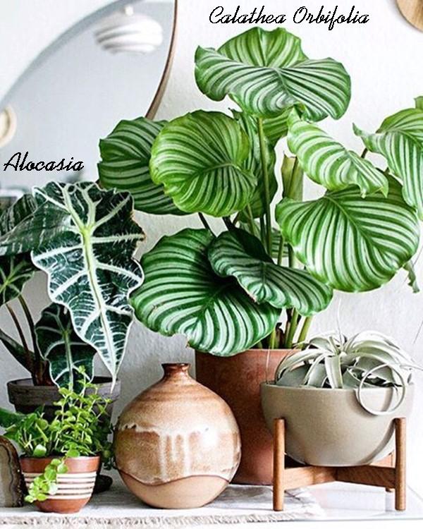 plantas dentro de casa - quais escolher