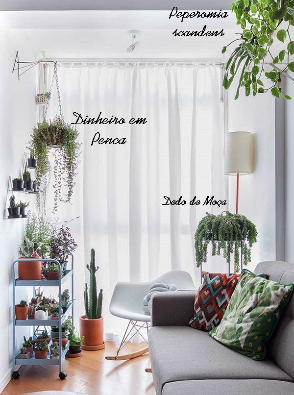 plantas dentro de casa cuidados