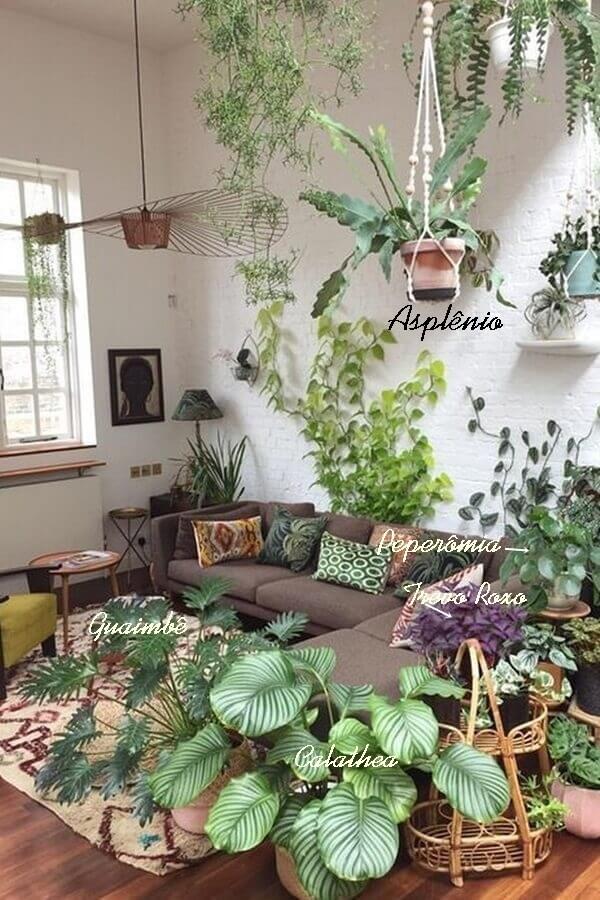 plantas dentro de casa - posição