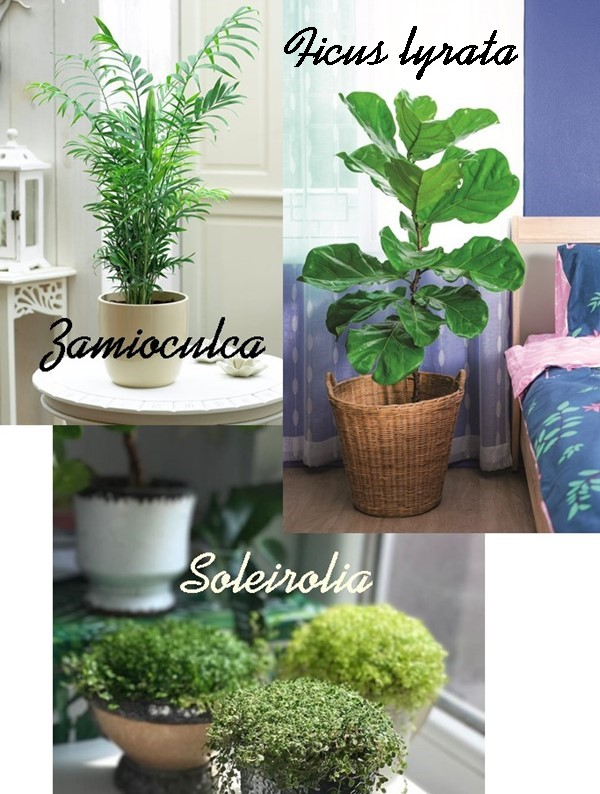 plantas para dentro de casa interior
