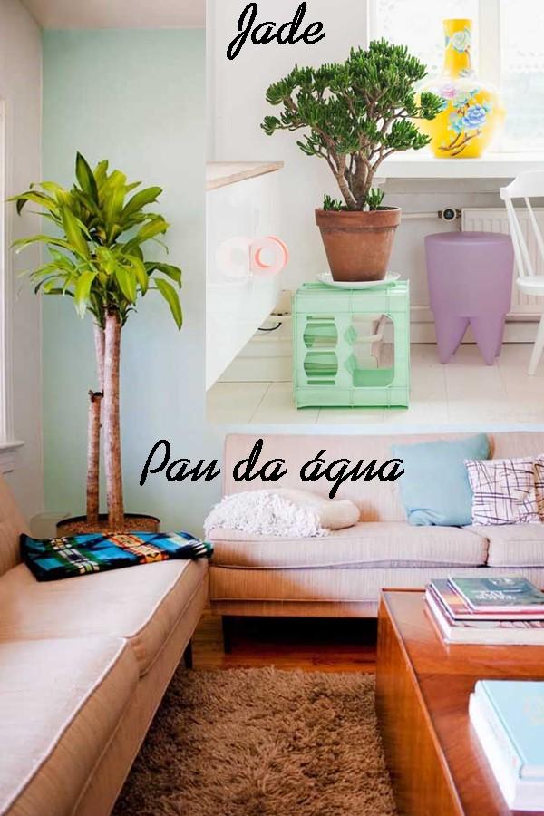 plantas dentro de casa Jade e pau dagua
