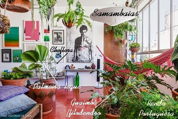 plantas dentro de casa samambaias e outras