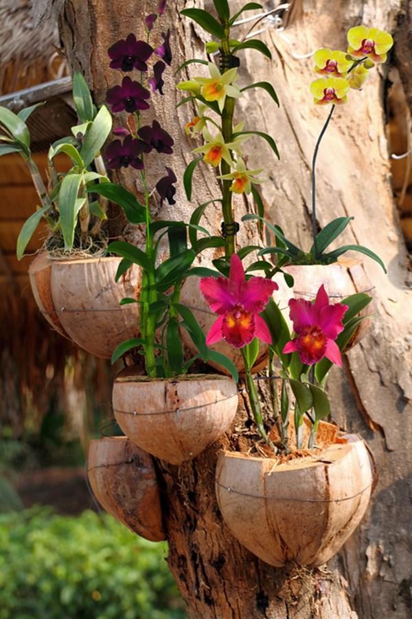 cultivar orquideas em arvore