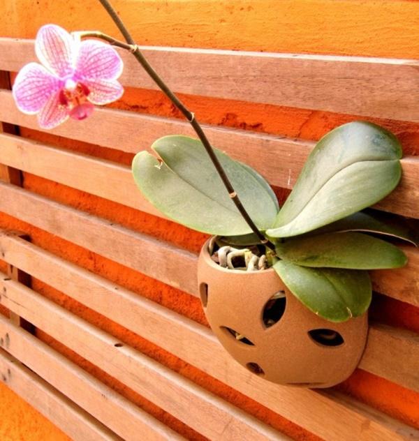 vaso de parede para orquidea