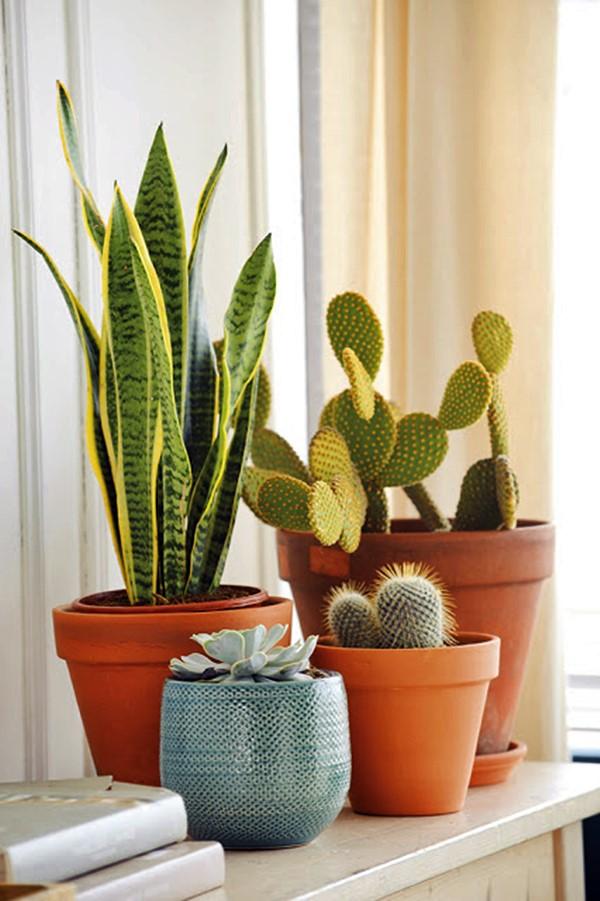 Vasos ceramica esmaltada e comum
