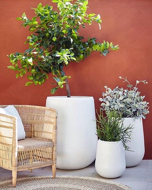 vasos de plantas brancos polietileno cimento