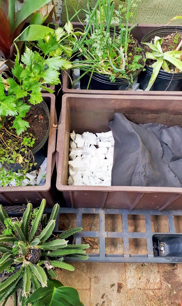 Passo a passo para fazer uma horta caseira