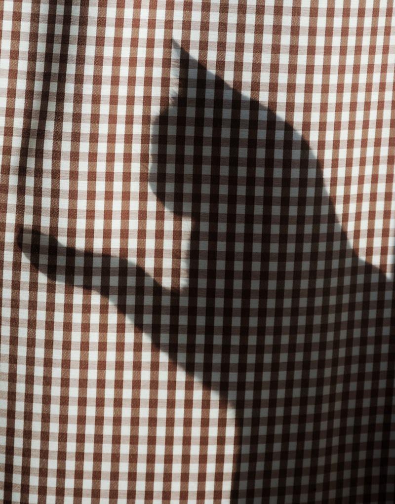 gato na cortina